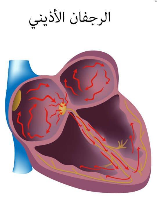 عالم القلب -الأذيني