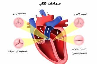 مقالات طبية -القلب-330x220