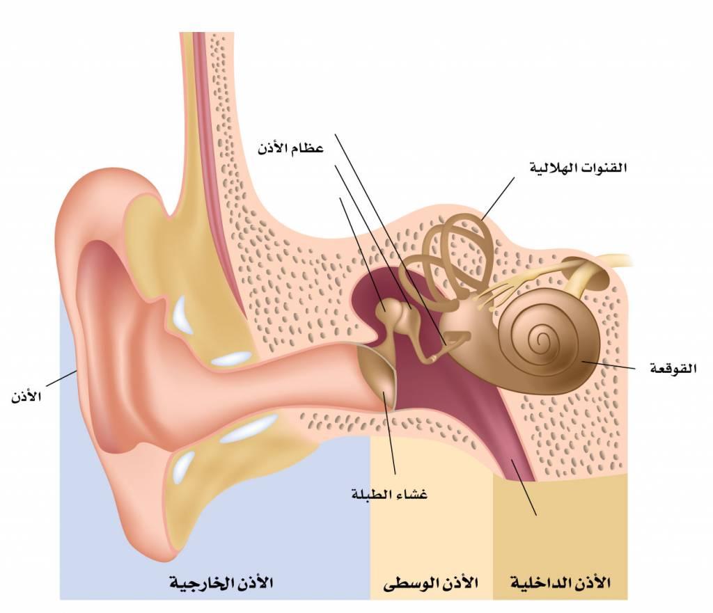 أعراض التهاب الأذن الوسطى anatomy-of-the-ear-Converted-1024x881