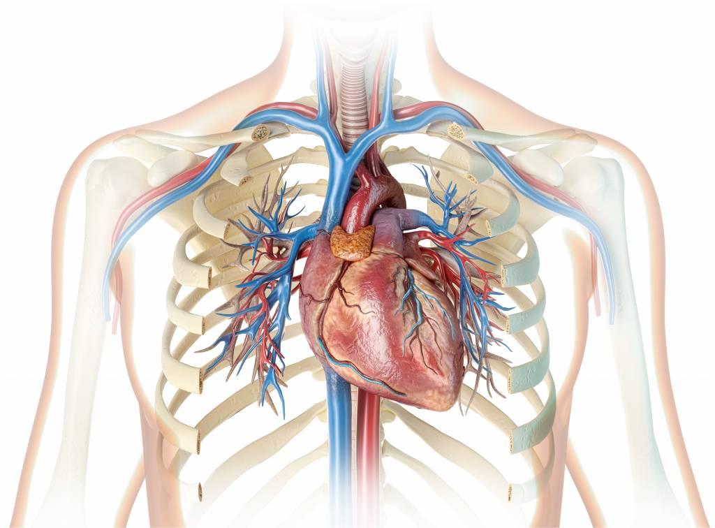 عالم القلب shutterstock_1359096899-1024x756