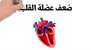 عالم القلب Screen-Shot-2021-07-15-at-11.28.31-AM